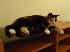 Casandra cat