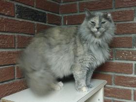 Cindylou cat