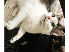 Henrietta cat