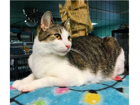 Victor cat