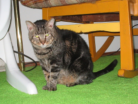 Purrcy cat