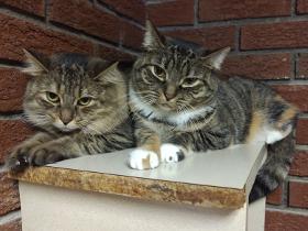 AbigailStar cats