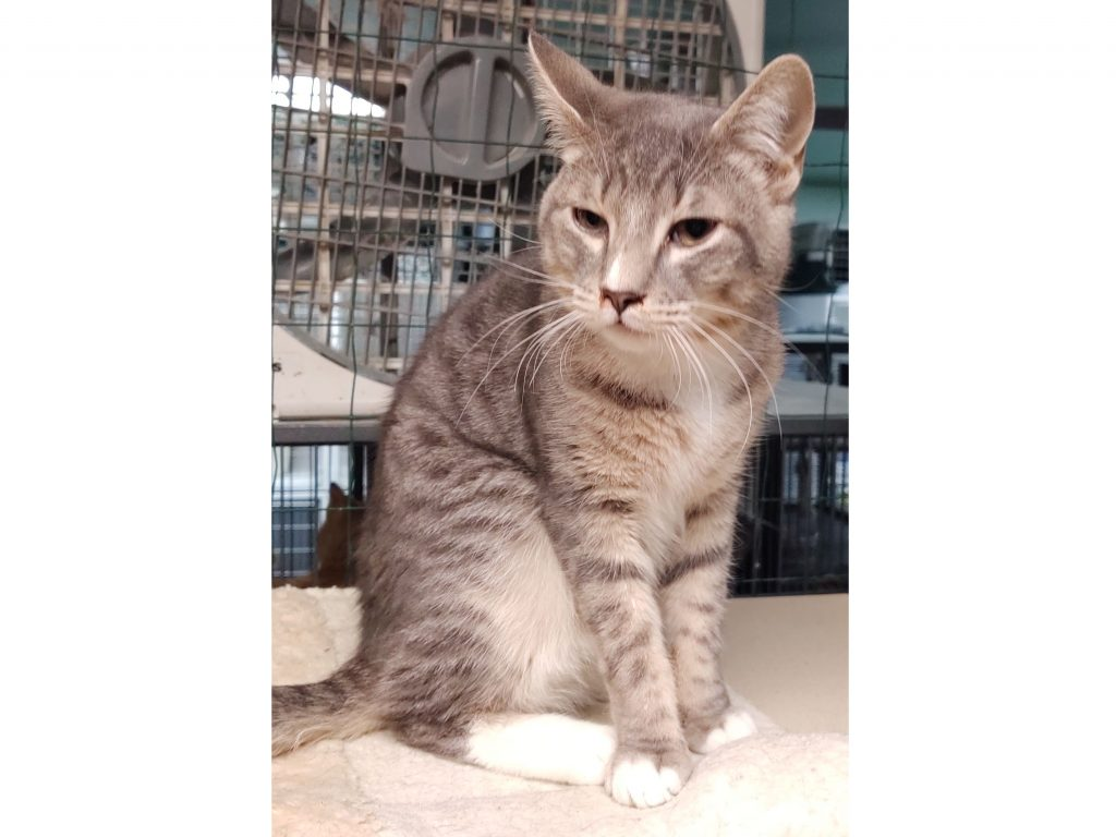 Palmer cat