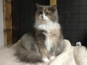 Emmylou cat