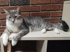 Jill cat