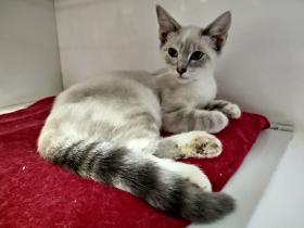Alice cat