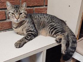 Jamie2 cat