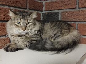 Abigail2 cat