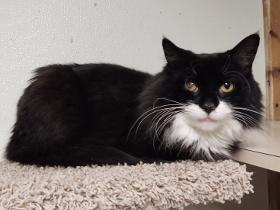 Odin cat