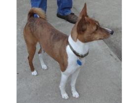 Rocky1 dog