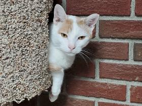 Dillon2 cat
